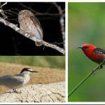 burung endemis