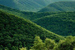 kesatuan pengelolaan hutan