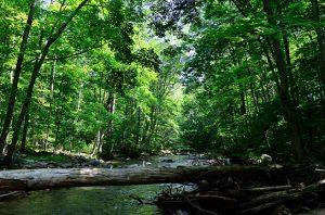 sistem baru pengelolaan hutan