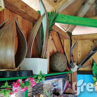 limbah pohon kelapa