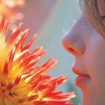 aroma bunga