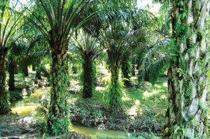 kelapa sawit berkelanjutan