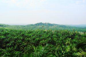 pelepasan kawasan hutan