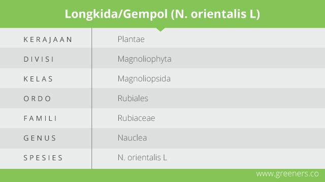 longkida