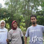 penanaman mangrove