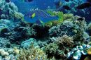 indonesia's marine potential