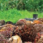 palm oil bill