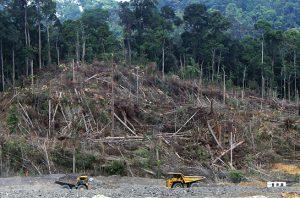 deforestasi indonesia