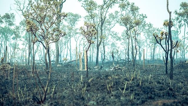 Ilustrasi Sisa Kebakaran Hutan. Foto : Istimewa