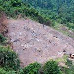 Inpres Nomor 5 Tahun 2019 Pemerintah Stop Beri Izin Baru Hutan Primer dan Lahan Gambut