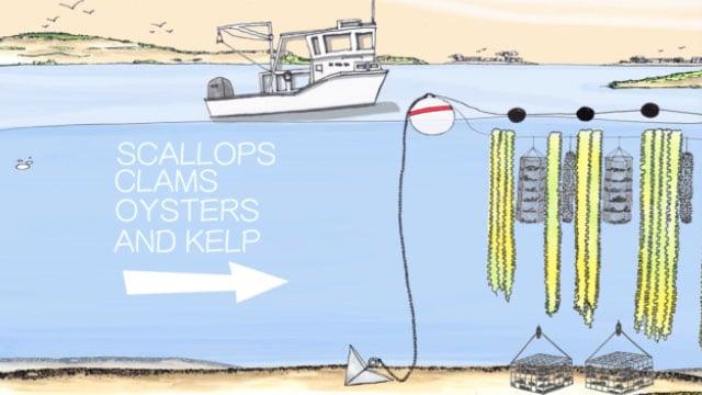 Pertanian Laut Berkelanjutan Oleh Nelayan Kanada GreenWave