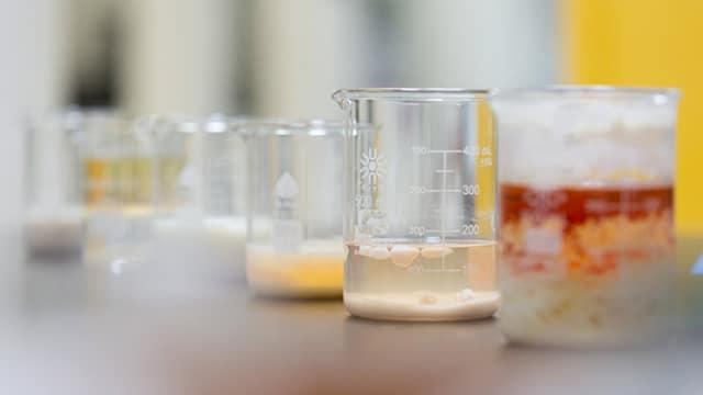 Ilmuwan Muda Temukan Bakteri yang Dapat Memakan Plastik. Foto : biocellection.com