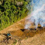 Forest Watch Indonesia, Setiap Tahun Indonesia Kehilangan Hutan Alam Sebesar 1,4 juta Ha, Ilustrasi Perambahan Hutan. Foto : Shutterstock