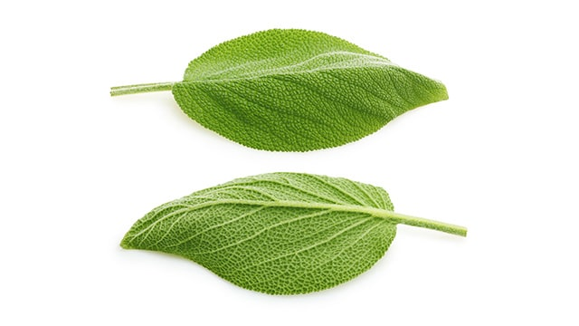 7 Obat Rumahan untuk Sakit Gusi Daun Sage