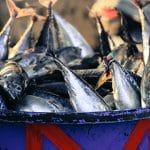 Indonesia Ekspor Produk Perikanan Tinggi Ke Amerika Serikat