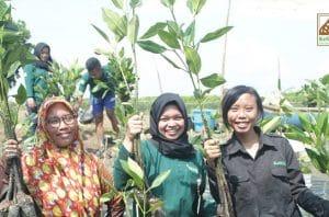 Kesemat, Pelopor Gaya Hidup Mangrove