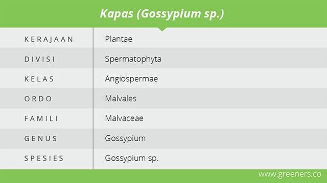 tabel spesifikasi kapas
