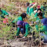 """Candi Darling"""" menanam pohon di komplek Candi Prambanan dan Candi Sewu, Selasa, 12 November 2019."""