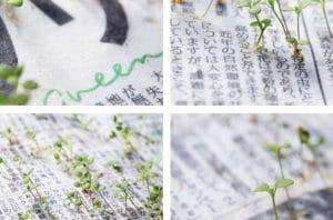 Mainichi Shimbun menciptakan koran yang dapat tumbuh menjadi tanaman.