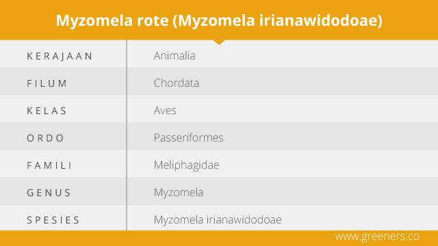 Taksonomi Myzomela Irianawidodoae
