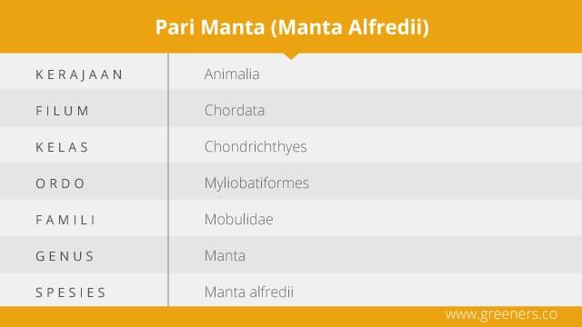 Klasifikas Ikan Pari Manta