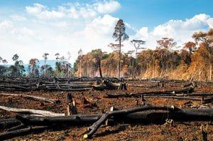 Kebakaran Hutan dan Lahan (Karhutla)