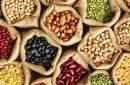Kacang Legume