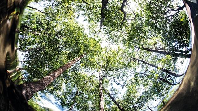 Hari Sejuta Pohon