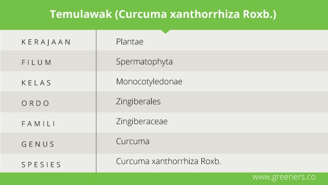 Taksonomi Temulawak