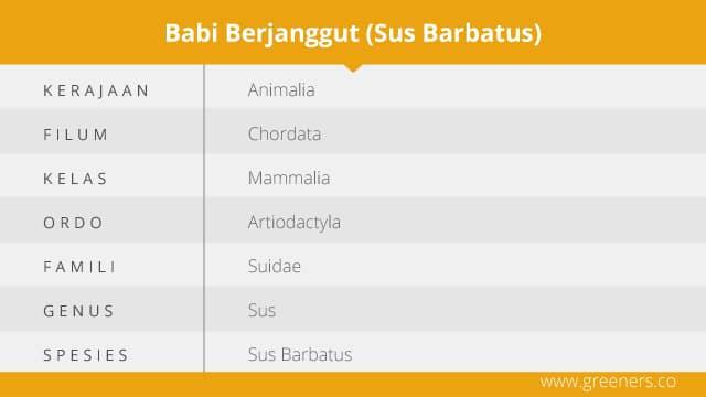 Taksonomi Babi Berjanggut