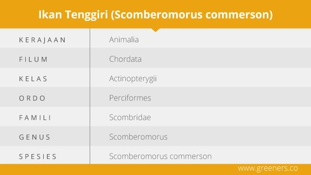 Taksonomi Ikan Tenggiri