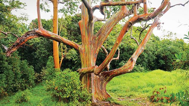 Pohon Pelangi