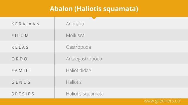 Taksonomi Abalon