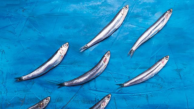 Ikan Teri