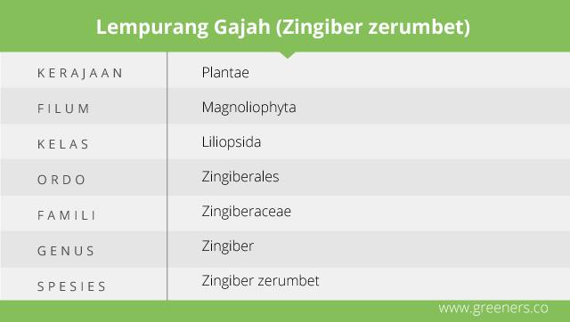 Taksonomi Lempuyang Gajah