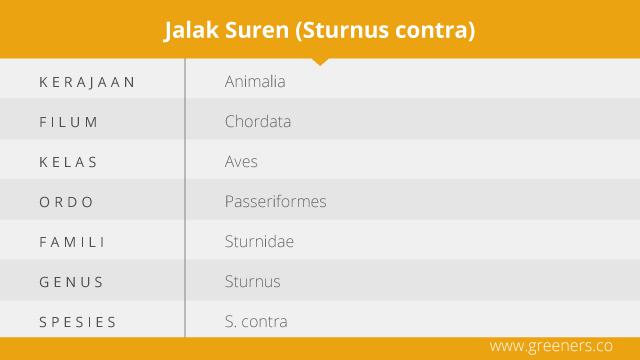 Taksonomi Jalak Suren