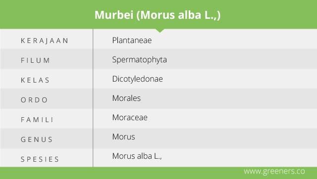 Taksonomi Murbei