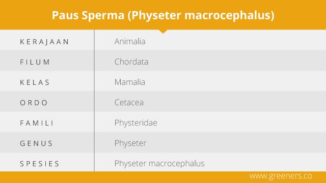 Taksonomi Paus Sperma
