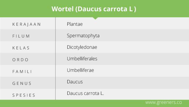 Taksonomi Wortel