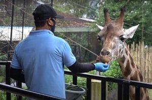 Satwa Kebun Binatang