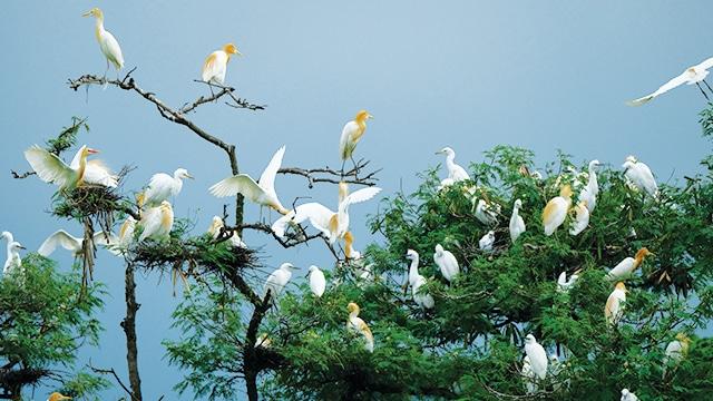 Hari Migrasi Burung Dunia