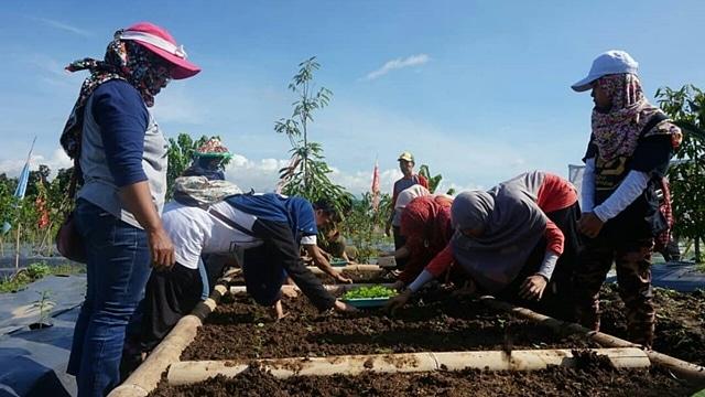 Indonesia Berkebun