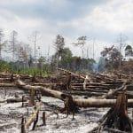 Deforestasi