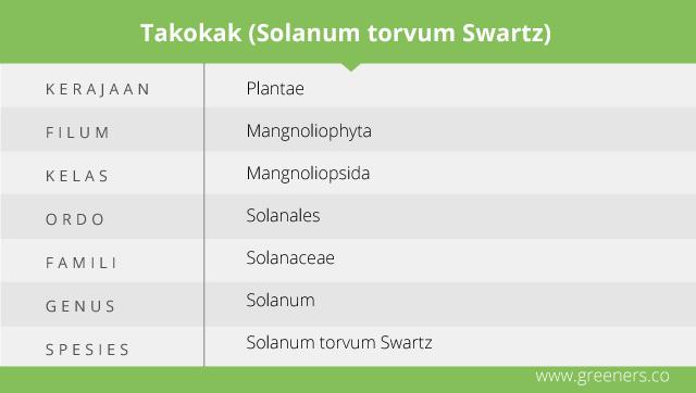 Taksonomi Takokak