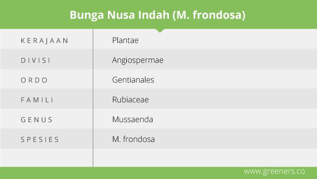 Taksonomi Nusa Indah