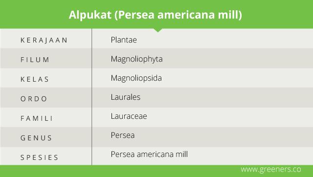 Taksonomi Avokad