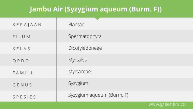 Taksonomi Jambu Air