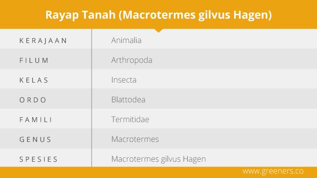 Taksonomi Rayap Tanah