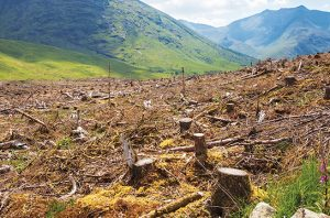 Research: Indonesian Banks Invest in Deforestation Risk Sectors