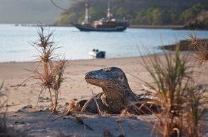 Taman Nasional Komodo